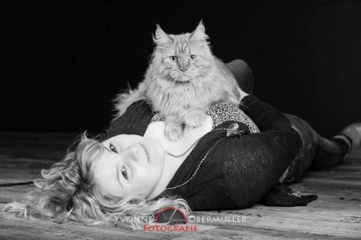 Perser ,Katze, Kätzchen, Katzenfotoshooting, Katzen im Fotostudio,
