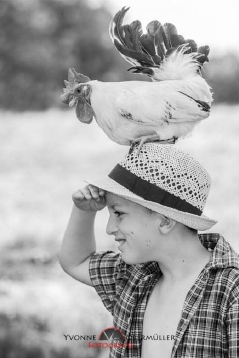 Hahn, Hühnershooting, Gockel