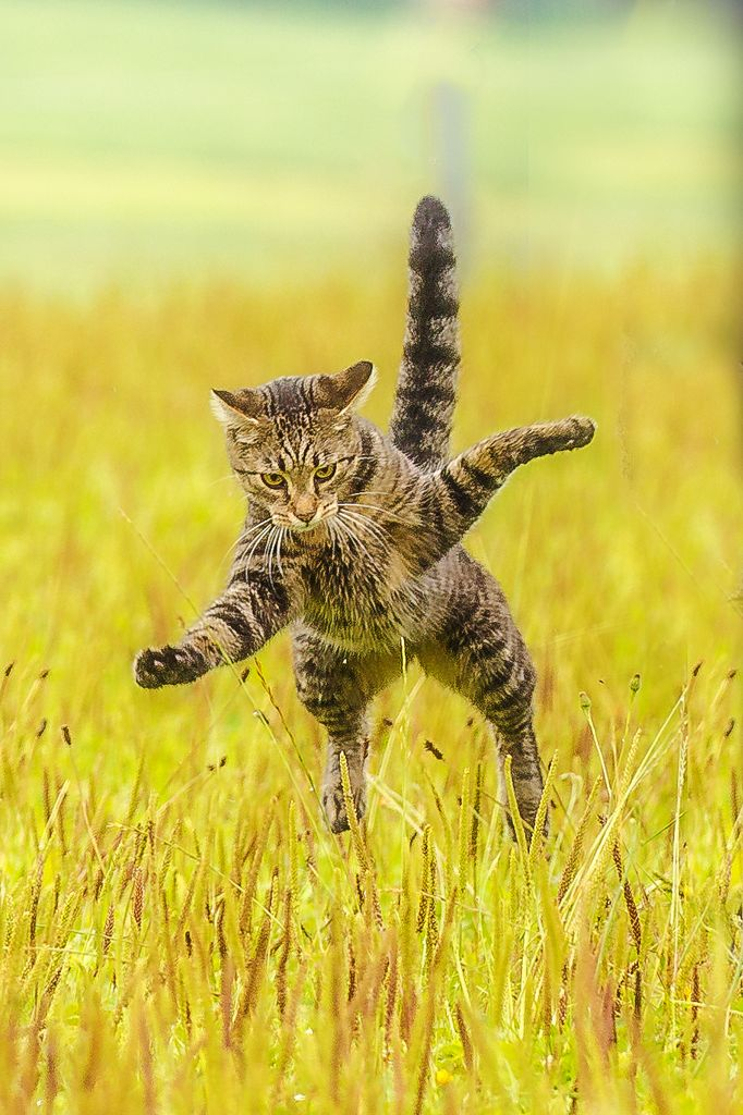 Katzenfoto, Katzenfotografie, süsses Kätzchen, Fotografin Niederbayern