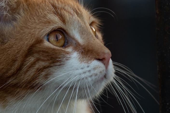 Katze, Katzen, Fotoshooting, Tierfotografie, Haustiere, Katzenshooting, Niederbayern, Bayerischer Wald, Fotografin