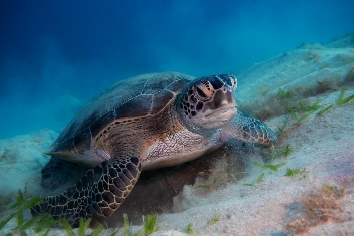 Schildkröte, Tauchen, Olympus, UnterWasserfotografie, ägypten