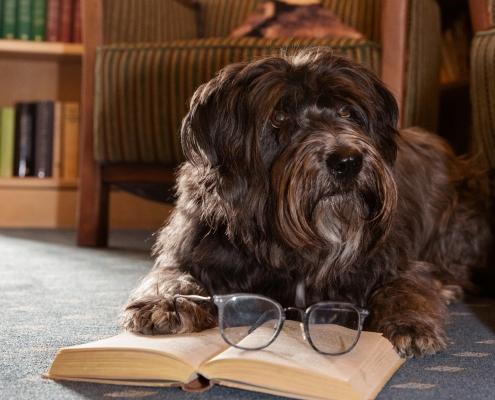 Hund, Bibliothek, Lesen,