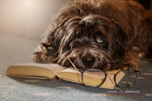 Lesen, Hund,