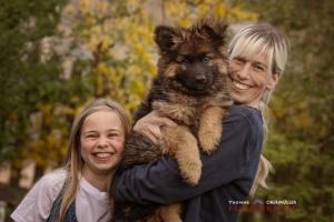 Altdeutscher Schäferhund Welpen