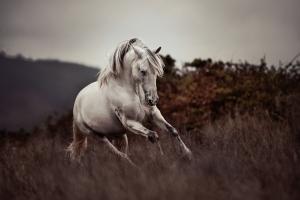 pferde laufbild