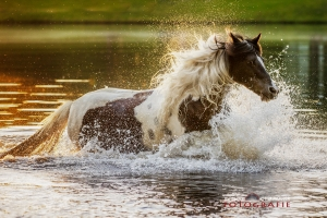 Pferd im Wasser